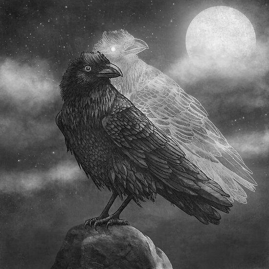 Night Raven  by Terry  Fan