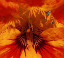 Fire Flower by Keith G. Hawley