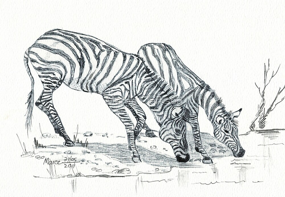 The puzzle of the Zebra's stripes by Maree Clarkson