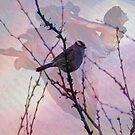 Soar by Suzanne  Carter