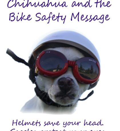 Chihuahua and the Bike Safety Message (Sticker Version 3 with White Background) Sticker