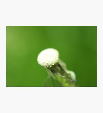 White spot Photographic Print