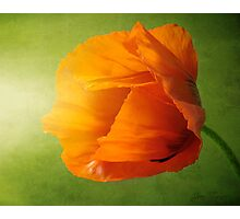 Poppy Light Photographic Print