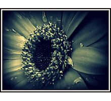 Old Beauty Photographic Print