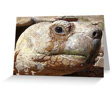 Aldabra Giant Tortoise Greeting Card