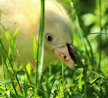 Greedy Duckling by karina5