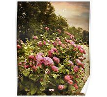 Fragrant Fields Poster