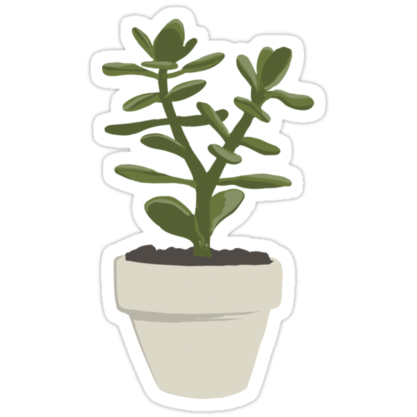 Crassula Ovata Convoluta (Money Plant) by Vicky Webb