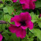 Flower by jclegge