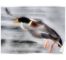 Duck Landing on Ice Poster