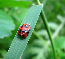 Time for Ladybugs by MarianBendeth