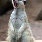 "Meerkat:  ""Is it nap-time yet?"" by Paula Tohline  Calhoun"