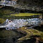Scary Alligator by Eileen Brymer