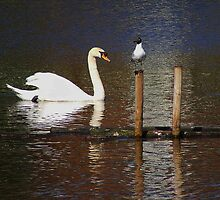 Swan and Gull by AnnDixon