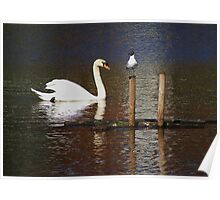 Swan and Gull Poster