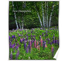 New Hampshire Poster Breathless Among lupines. Poster
