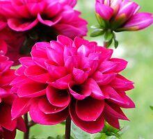 Summer Flowers by missemilyo