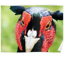 Unpleasant Pheasant! Poster