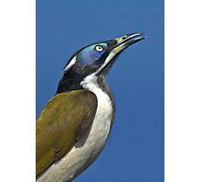 THE BANANA BIRD Photographic Print