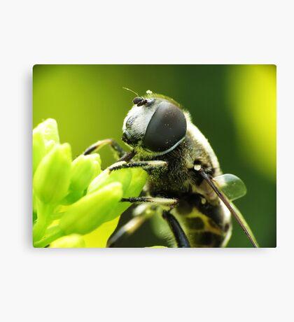 Bee Mimic 1  Canvas Print