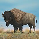 American Bison by Walter Colvin