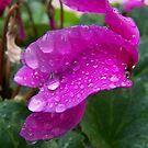 Drips of rain by Matthew Walmsley-Sims