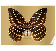 Speckled Hen Butterfly Poster