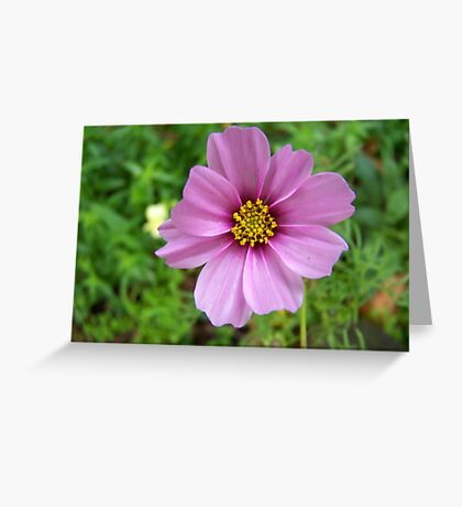 Cottage flower Greeting Card