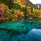 Autumn in Five-flower Lake, Jiuzhaigou (036)  by Daniel  Chui