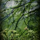 Reflections in Green by Barbara Gerstner