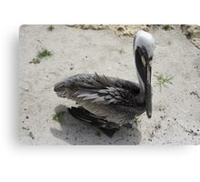 Lonely Pelican Canvas Print