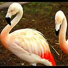 Pink Pair by Laurie Perry