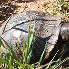 turtle by ssphotoshop