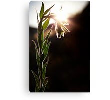 Stand Up Straight...Or Not Canvas Print