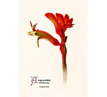 Botanic Print Flower Series Photographic Print
