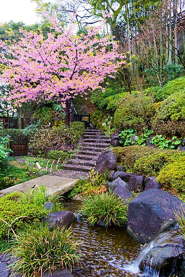 Japanese Garden by Zach Chadim