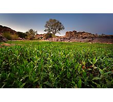 Green Front Photographic Print
