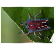 Stink bug. Poster