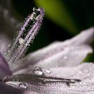 Sparkling water hyacinth by Celeste Mookherjee
