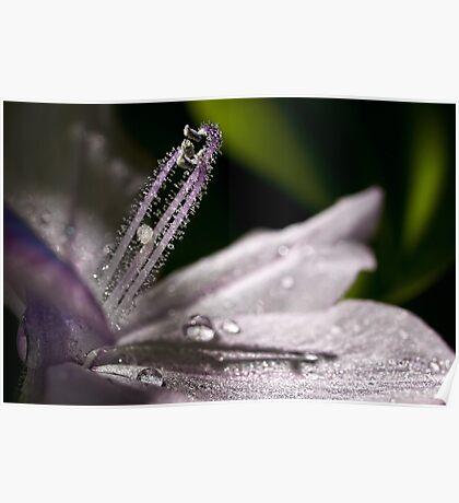 Sparkling water hyacinth Poster