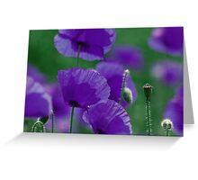 violett Mohn Art Greeting Card