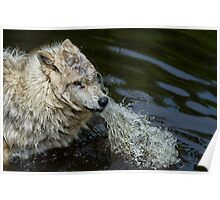 Wet & Wild  Poster
