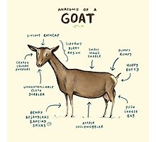 Anatomy of a Goat Photographic Print