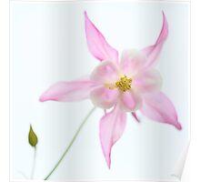 aquilegia, flower, garden, Great Dixter, Great Dixter Gardens Poster