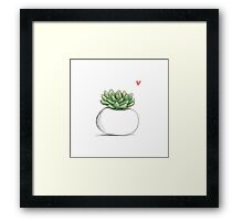 Succulent in Plump White Planter Framed Print