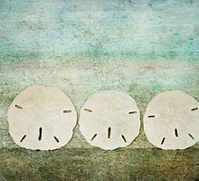 Sand Dollars by Barbara Ingersoll