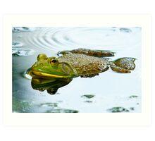 Bull Frog Up Close Art Print