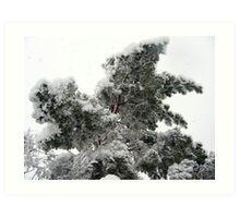 Heavy Spring Snowstorm Art Print