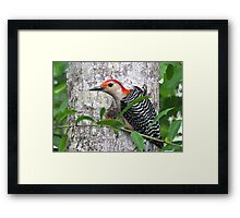 Red Bellied Woodpecker - I'm So Darned Handsome Framed Print