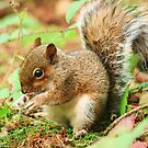 squirrel by chrisblackwell29